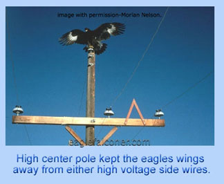 Eagle on electric pylon