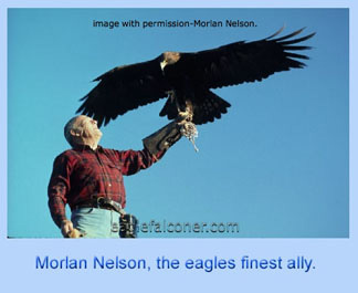 Morley Nelson, golden eagle