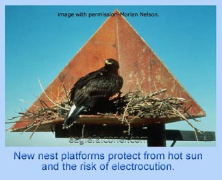 Eagle pylon nest platform