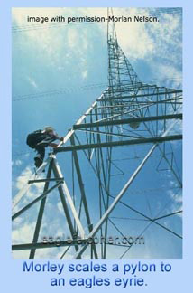 Nelson climbing an electric pylon