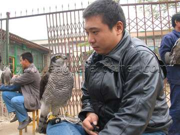 Chinese falconry