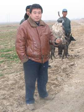 TuHu Chinese falcon