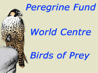 Peregrine Fund, falconers breed raptors