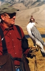 Falconer with gyr falcon