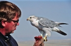 John Dahlke, Wyoming falconer