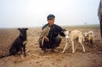 Chinese falconer with dogs