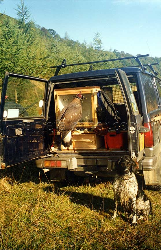 Dog and Eagle in a van
