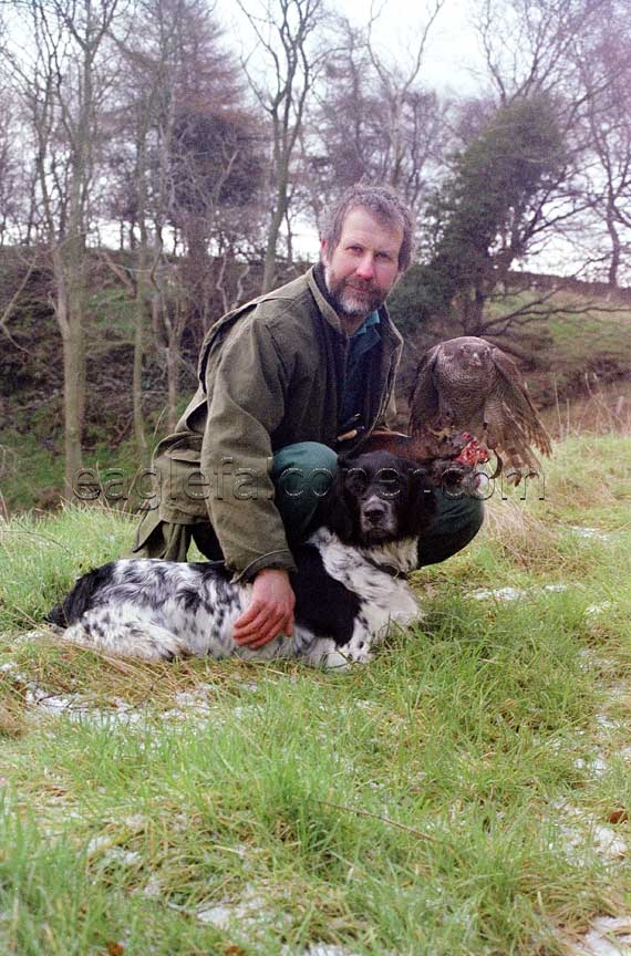 Alan Gates with Munsterlander and goshawk