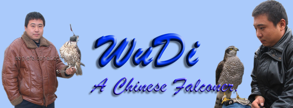 Wu Di a Chinese Falconer
