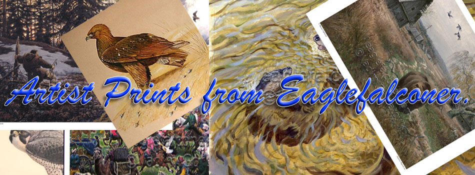 Falconry Prints and artwork